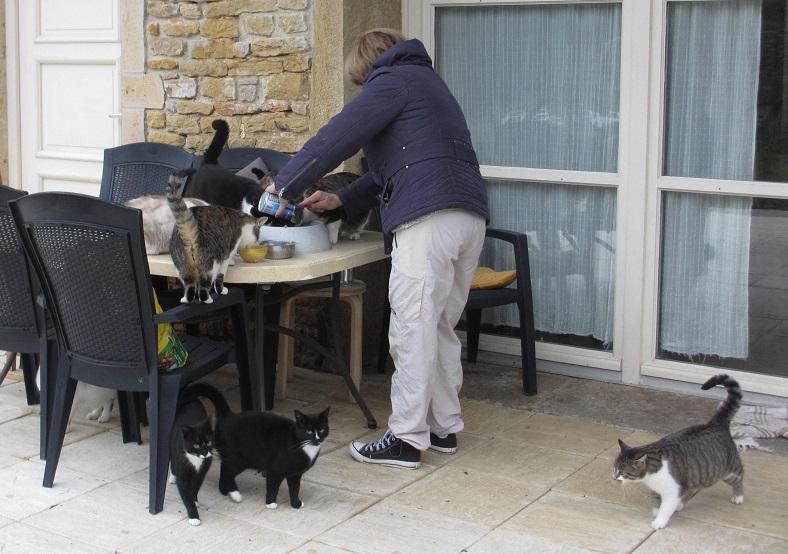 nourrissage des 15 chats